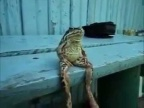 frog sitting on a bench like a human